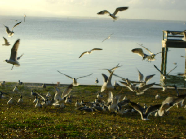 Seagulls 19 by princesslillymono