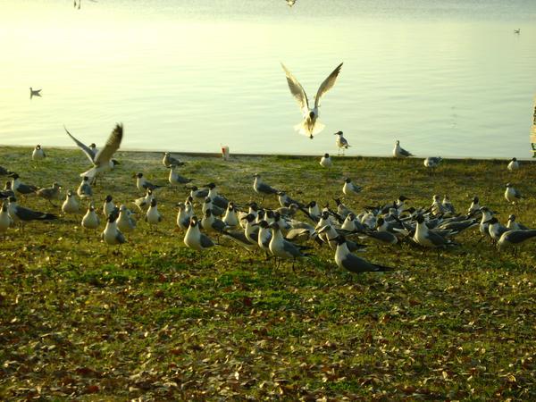 Seagulls 21 by princesslillymono