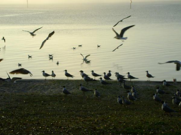 Seagulls 22 by princesslillymono