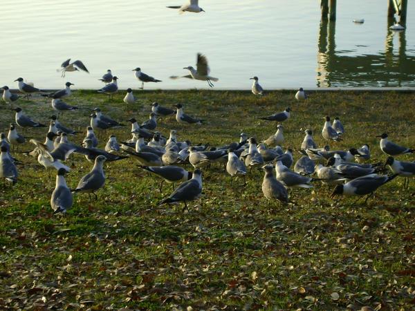Seagulls 23 by princesslillymono