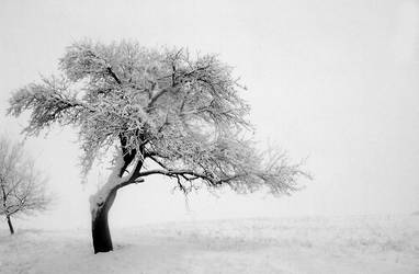 Tree in the fog by arpi