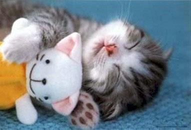 kitty by princessg123