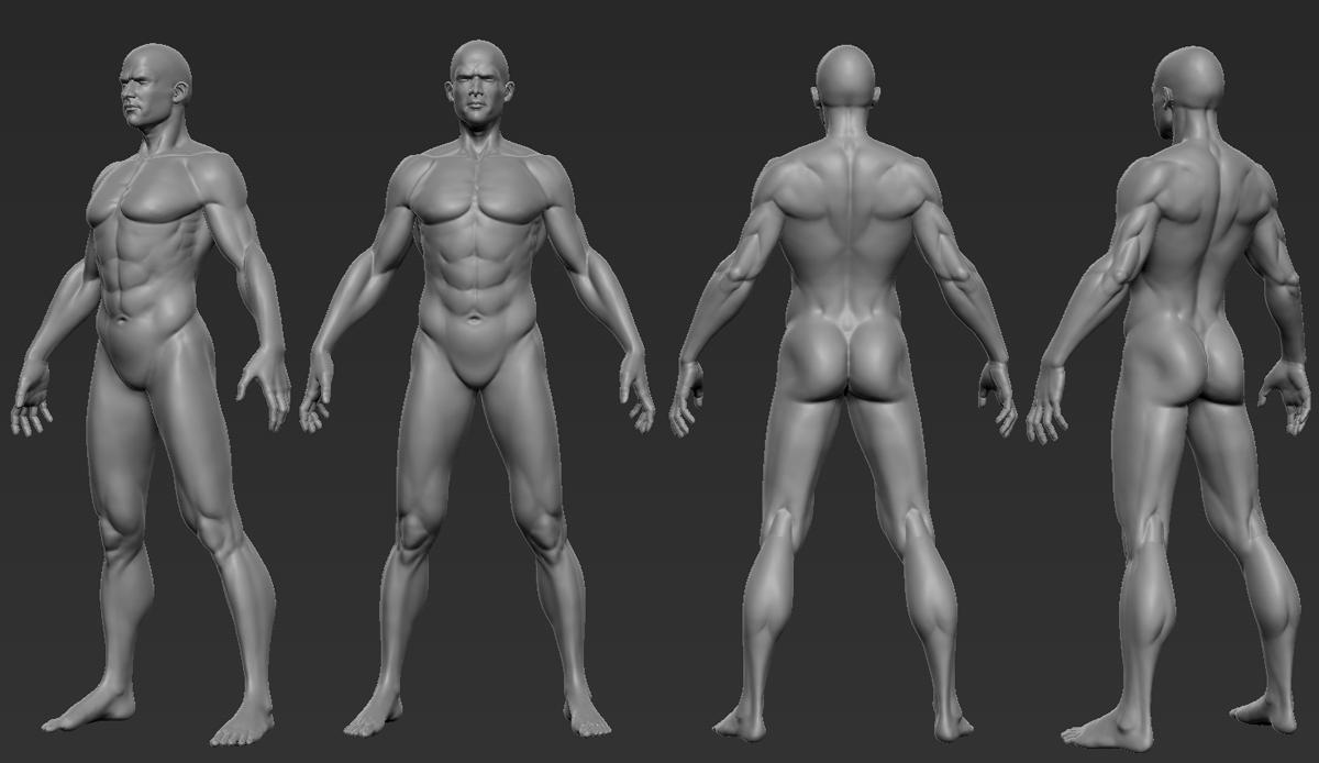 Male Anatomy Study By Sinkunarts On Deviantart