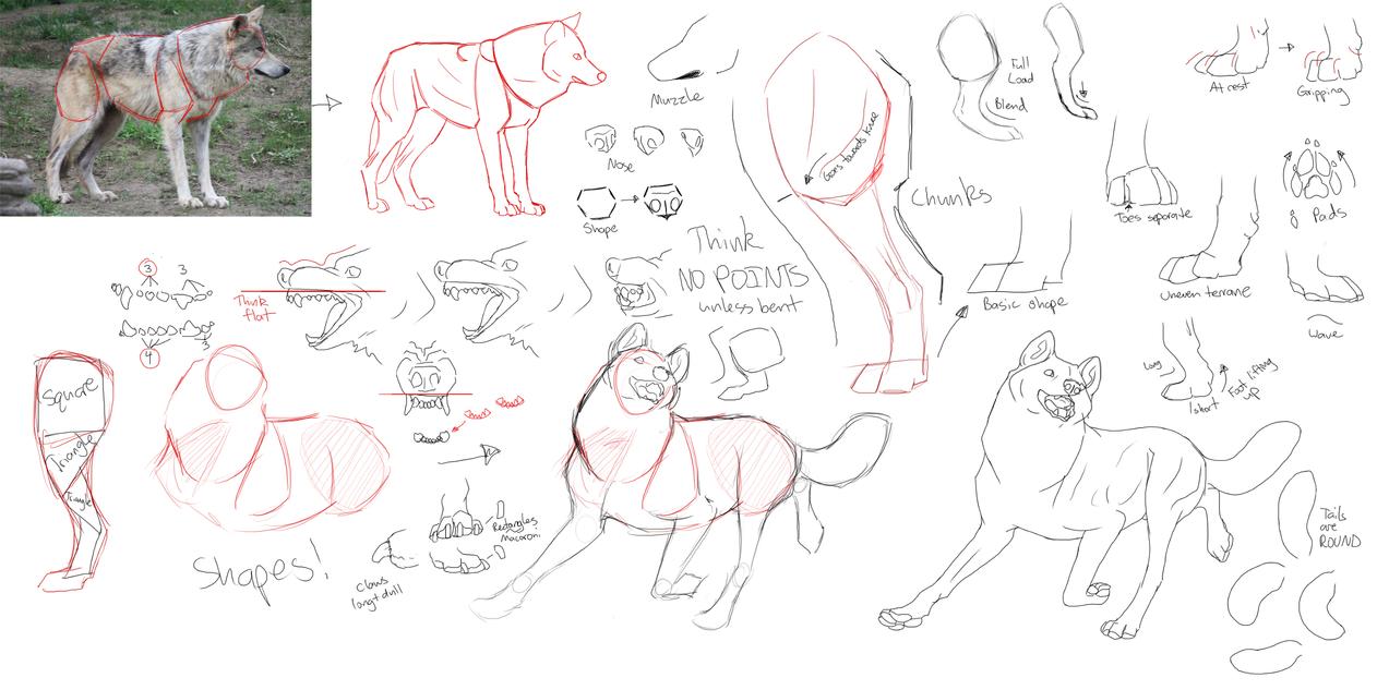 step by step how to draw anamae wolf