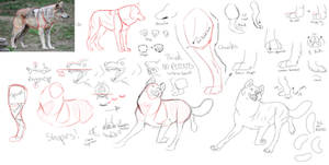 How I draw wolves Basics by yellow-fr3ak-photos