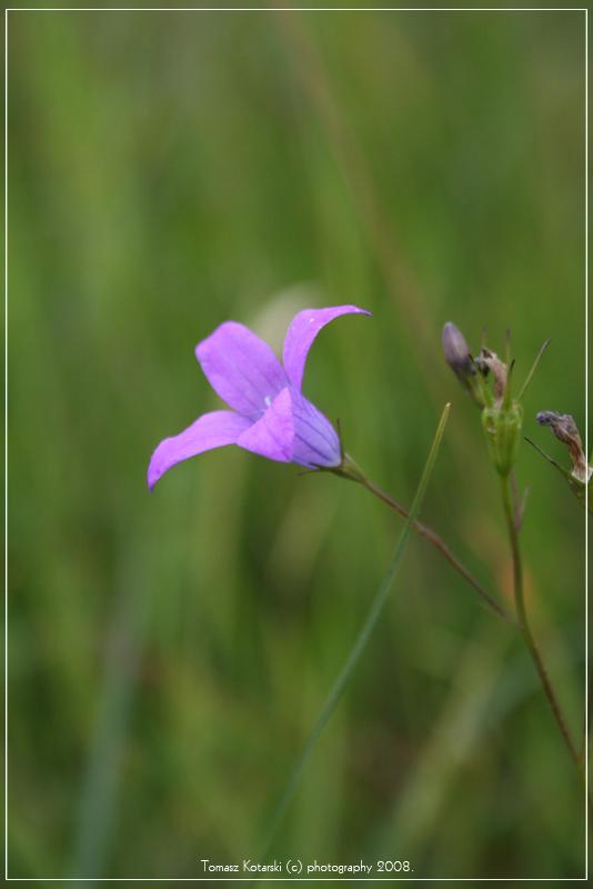 kwiat1 by Tomala89