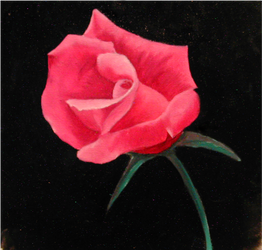 red rose by e1ement