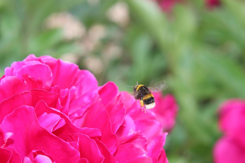 Flower Bee 6 by Kellyrea