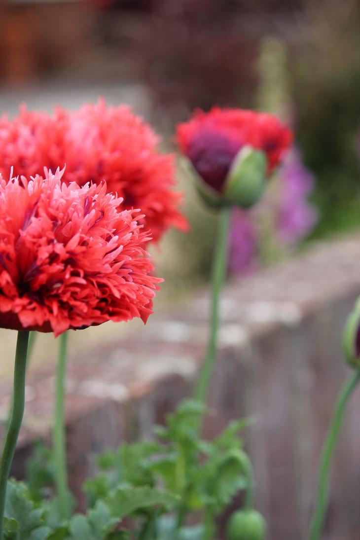 Flowers by Kellyrea