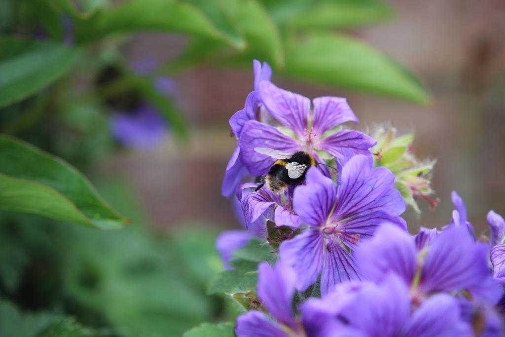 Flower Bee 7 by Kellyrea