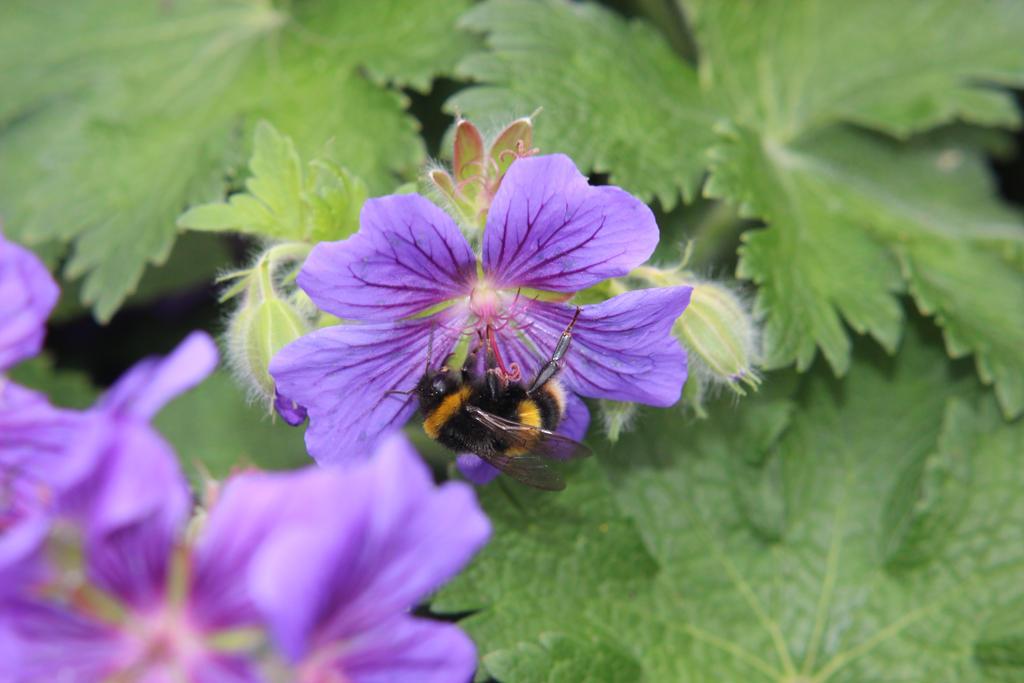 Flower Bee 9 by Kellyrea