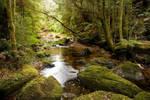 Rainforest - Tasmania