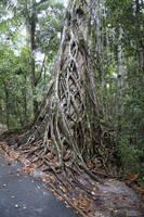 Rainforest 001 - Roots by petronellavanree