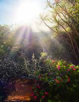 Sunrise in my back garden by petronellavanree