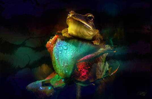 The frog and the rose....