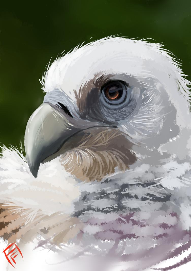 Himalayan Vulture by Arcticfox98