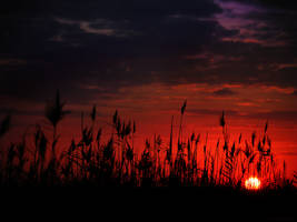 The Setting Sun by gilad