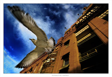 The Freedom To Fly by gilad