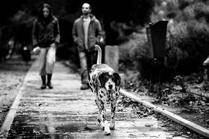 Life in Black and White by gilad