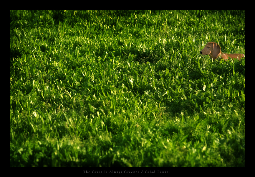 The Grass Is Always Greener by gilad