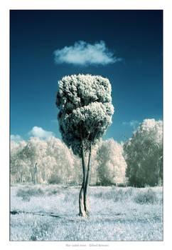 The saint tree