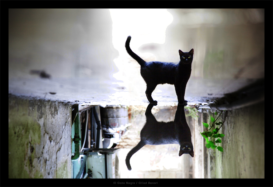 El Gato Negro by gilad