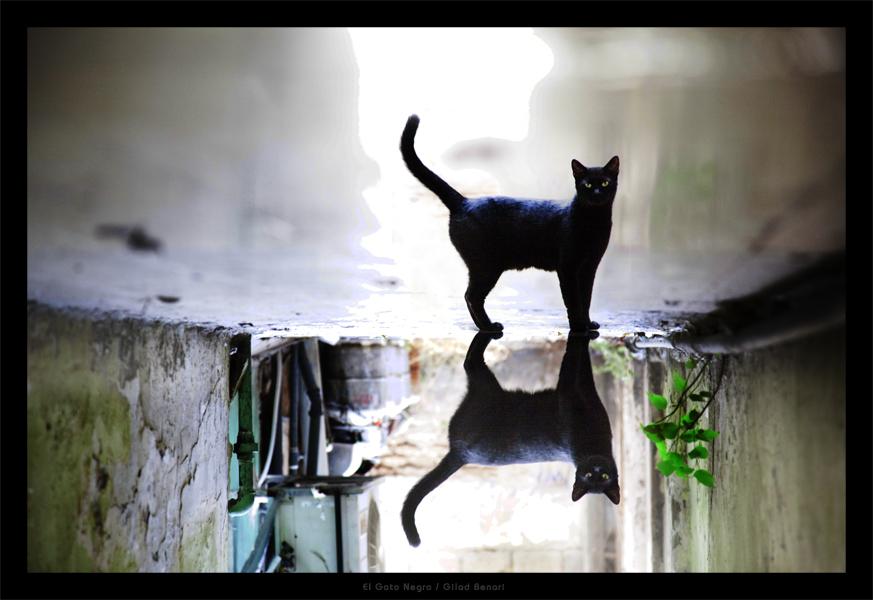 Vše o kočkách a nejen o nich na blog cz