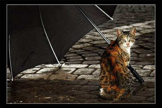 I'll Take The Rain