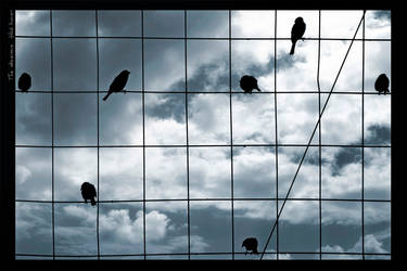 The Observers by gilad