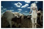The little albino