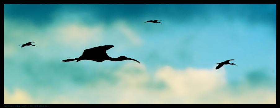 """Obrázek """"http://fc01.deviantart.com/fs11/i/2006/247/0/5/Across_The_Sky_by_gilad.jpg"""" nelze zobrazit, protože obsahuje chyby."""