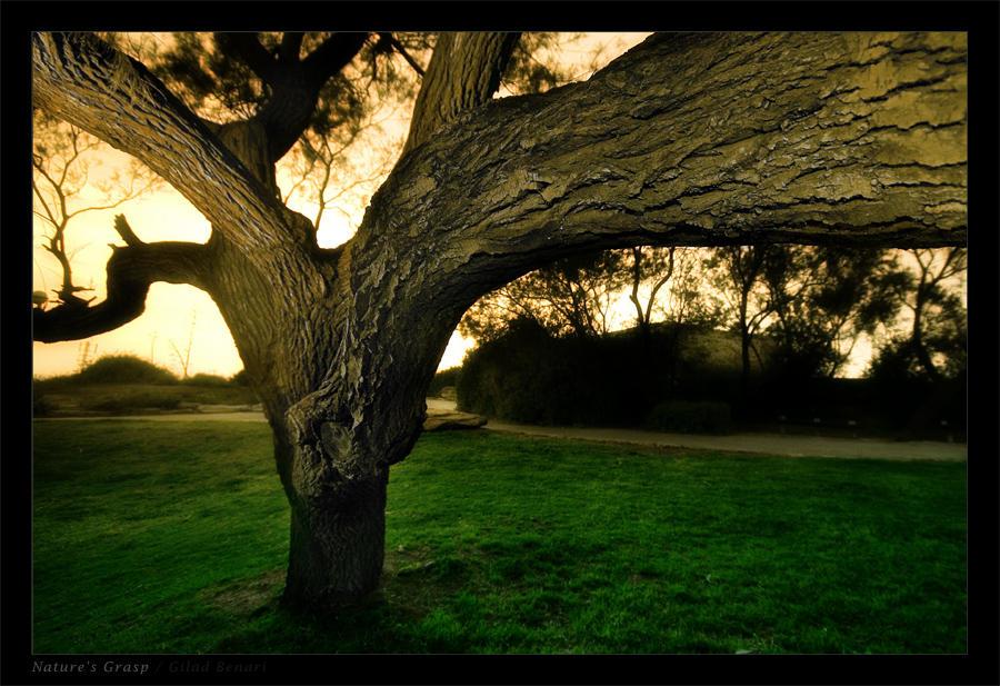 """Obrázek """"http://fc01.deviantart.com/fs12/i/2006/314/b/b/Nature__s_Grasp__by_gilad.jpg"""" nelze zobrazit, protože obsahuje chyby."""
