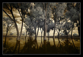 Swamp Forest by gilad