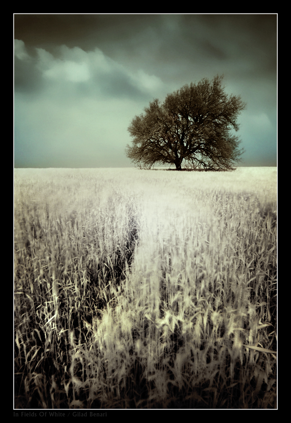 """Obrázek """"http://ic3.deviantart.com/fs13/f/2007/055/9/a/In_Fields_Of_White_by_gilad.jpg"""" nelze zobrazit, protože obsahuje chyby."""