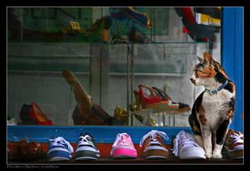 If You Were in My Shoes by gilad