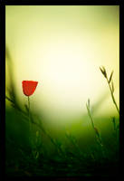 Feeling Red by gilad
