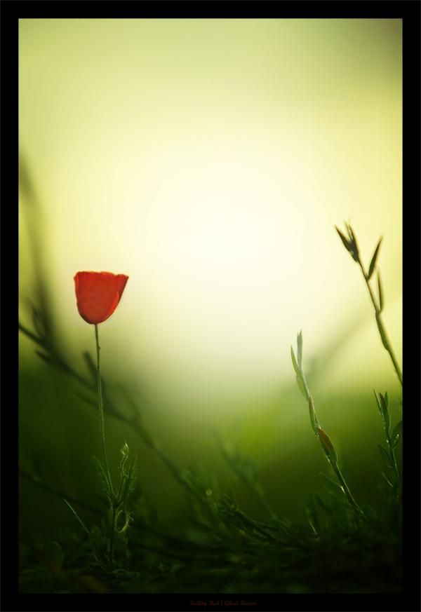 http://fc04.deviantart.com/fs15/f/2007/094/8/d/Feeling_Red_by_gilad.jpg