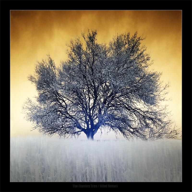 """Obrázek """"http://ic3.deviantart.com/fs16/f/2007/132/f/a/The_Flaming_Tree_by_gilad.jpg"""" nelze zobrazit, protože obsahuje chyby."""