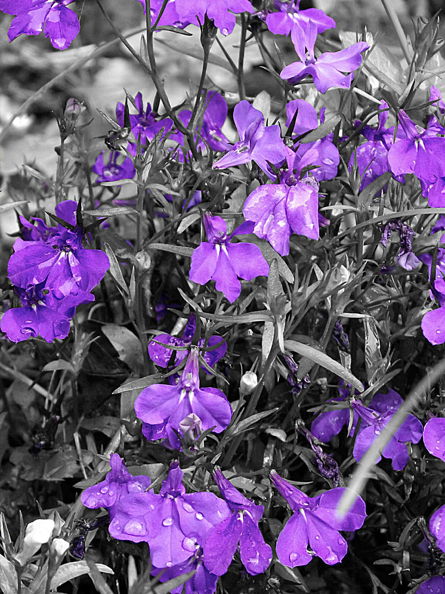 Flowers by Peggasaurus-Rex