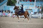 Devon 2009 Saddlebred 1