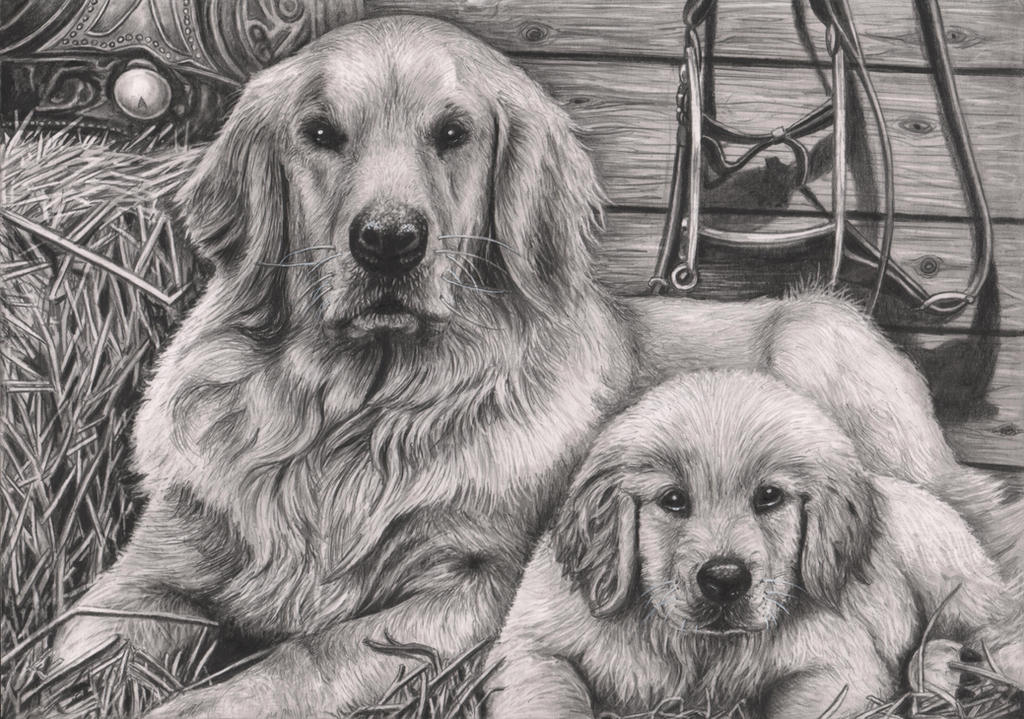'Dog and Puppy' graphite drawing