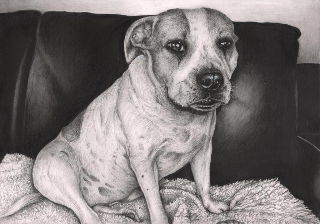 'Gucci' dog graphite drawing