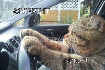 Funny Cat Meme Pictures : Top funniest cat memes u tail threads