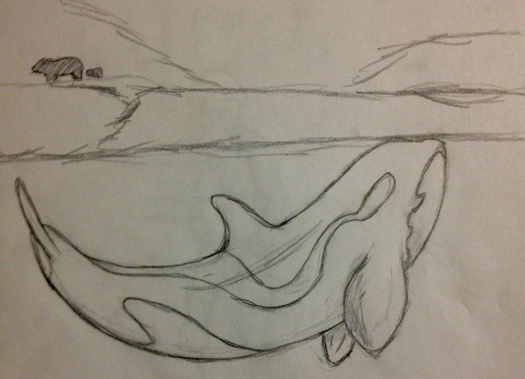 Arctic Orca by organizationXIIIfan1