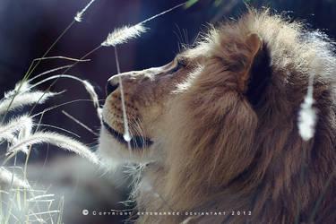 Lion_0045