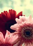 Lady Flower by yylee07