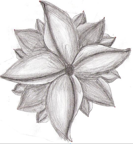Easy Flower Drawings In Pencil: Flower Pencil Art By Foxlightt On DeviantArt
