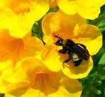 Bumblebee 1 by eaking68