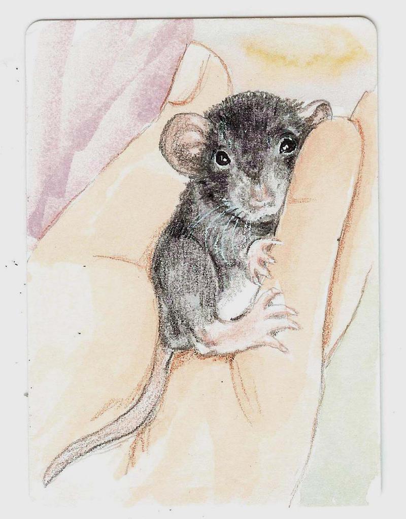 Baby dumbo rat by theillustratedrat