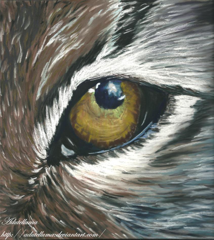 Lynx's eye by Adutelluma